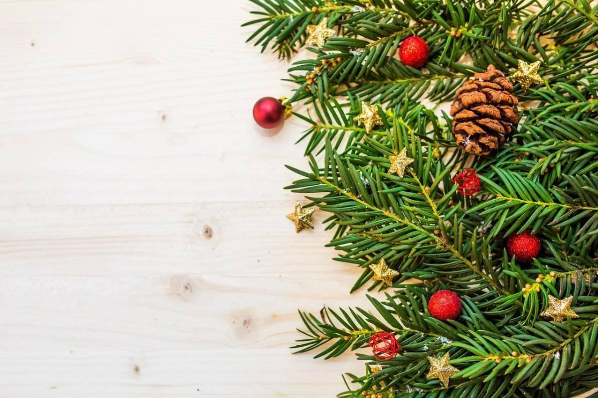 Les sapins de Noël sont-ils écologiques ?